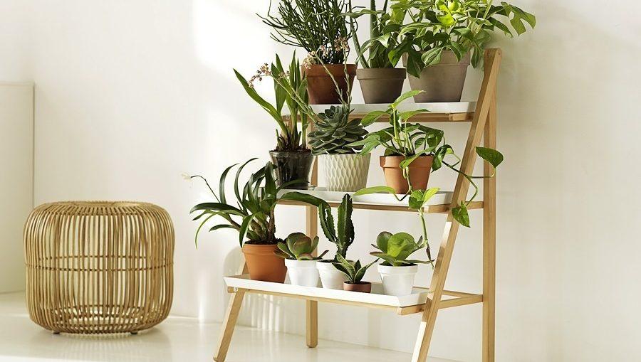 6 plantas para ter em casa